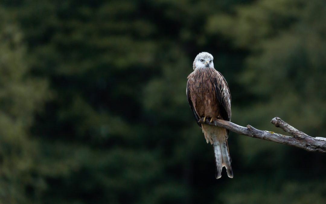 Another dream has come true – I have photographed another amazing bird of prey