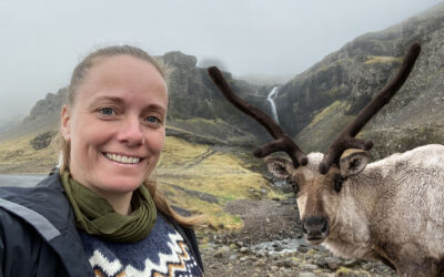 I saw reindeer – 2 days in a row!